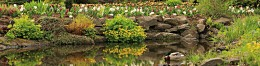 De siervijver is een vijver waarin planten de hoofdrol spelen