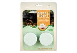 Algae Blocks