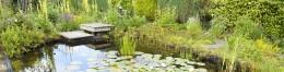 n een plantenvijver draait het om planten en waterplanten