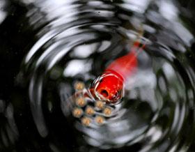 Er bestaan vele soorten visvoer.