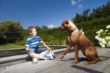 Avec le chien au bord du bassin