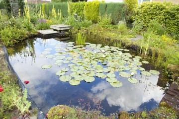 Plant pond