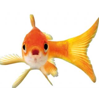 Wat voor visvoer geef ik mijn vissen?