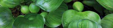 Zuurstofplanten