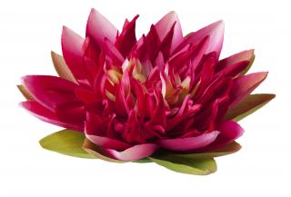 Floating Flowers Lotus