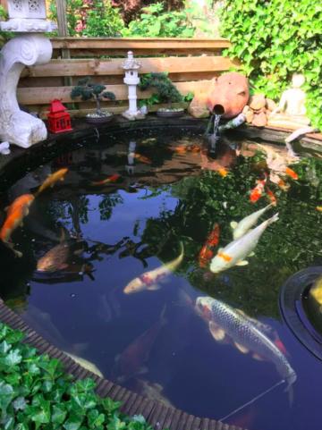 Pond tips for the summer velda for Koi pond kh level