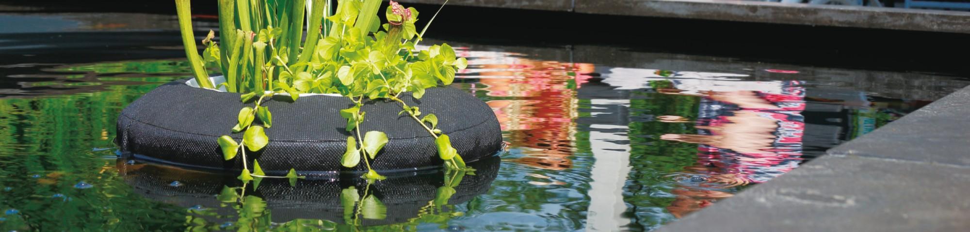 Welche Art Teich wählen Sie