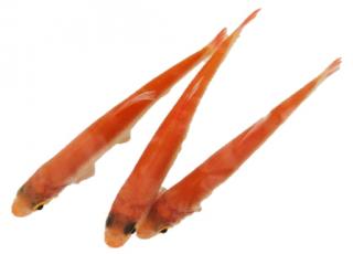 Orfen die idealen teichfische velda for Teichfische shubunkin