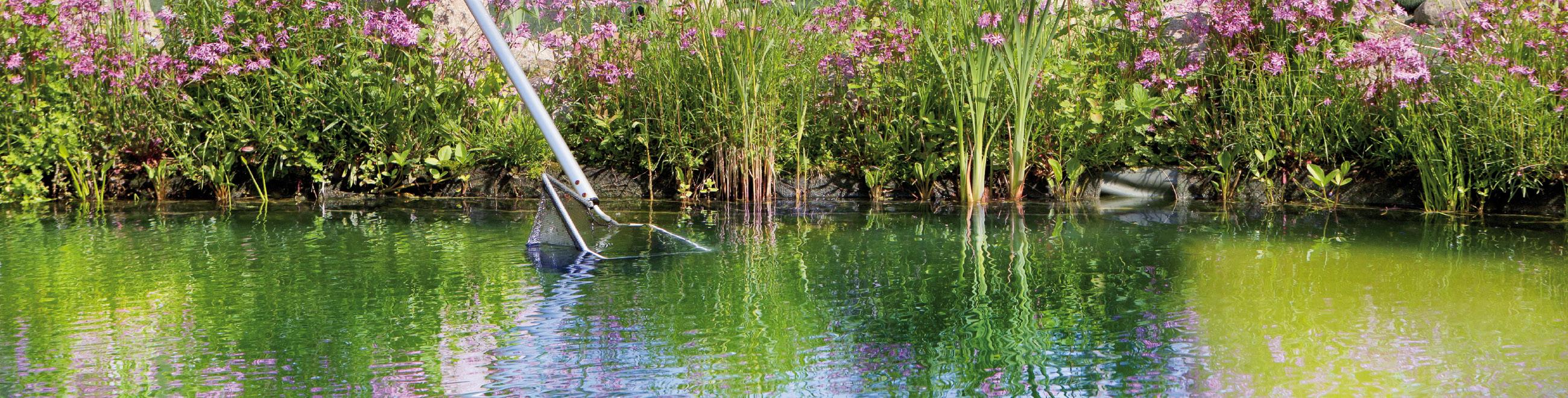 Welche art teich w hlen sie blog von velda teichspezialist for Teich ohne fische