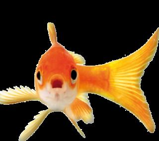 Teichfische