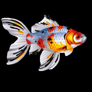 Shubunkin teichfisch mit perlmutter ausstrahlung velda for Teichfische shubunkin