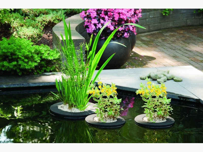 Floating plant island velda for Floating pond plants
