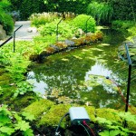 Pond-Protector-bij-vijver