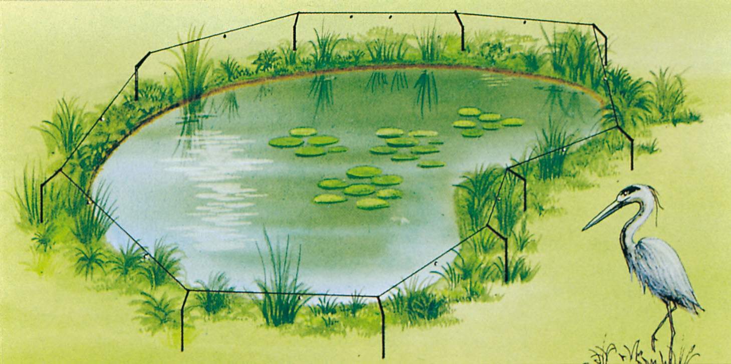 Pond Electric Fence To Protect Your Pond From Herons And