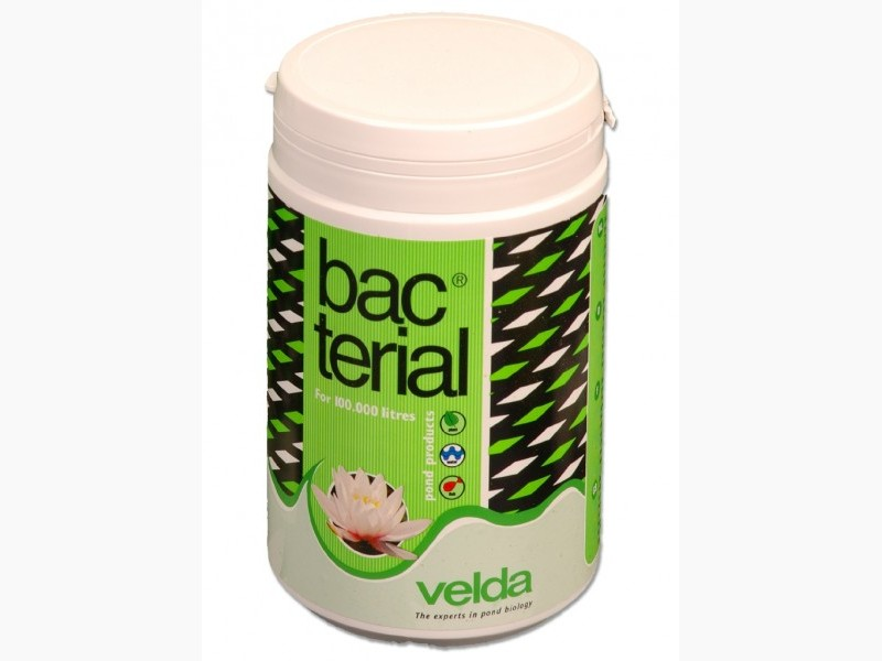 Bacterial Velda